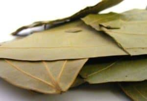 Bay-Leaf-Photos
